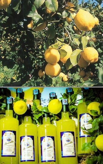 Amalfi-lemon